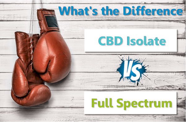 Full spectrum versus CBD isolate