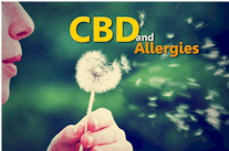 research on how CBD works for allergies and histamines