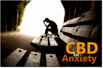 research on how cbd work for anxiety