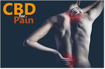 research on how CBD works for pain
