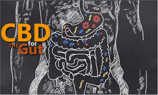 How does CBD work for the gut