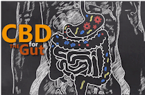 research on how CBD works in the gut